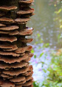 Bäume 20 von Regina Raaf