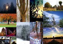Bäume 21 Collage 1 by Regina Raaf