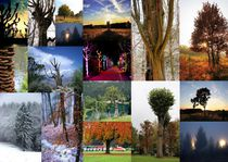 Bäume 23 Collage 3 von Regina Raaf