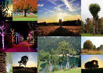 Bäume 25 Collage 5 von Regina Raaf