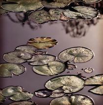 Serene Waterlilies by Karen Black