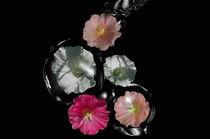 Wasser und Blumen von Stefanie Keller