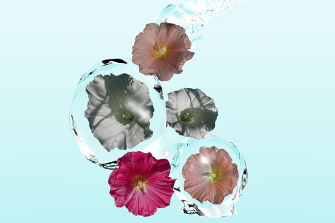 Blumen-hellb