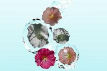 Wildblumen von Stefanie Keller