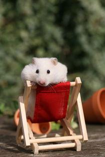 Hamster von Juliane Meyer