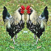 Hahnen Duell 3 von kattobello