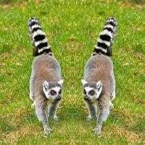 Katta Zwillinge by kattobello