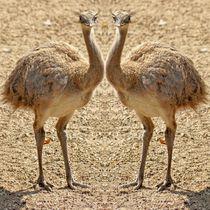 Nandu Zwillinge von kattobello