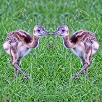 Nandu Küken Zwillinge by kattobello