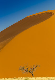 Namibian Sand Dunes by Maresa Pryor-Luzier