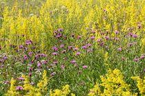 Sommerblumenwiese; 16.07.2017 by Anja  Bagunk