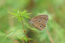 'Der Schmetterling auf der Blüte' von Bernhard Kaiser