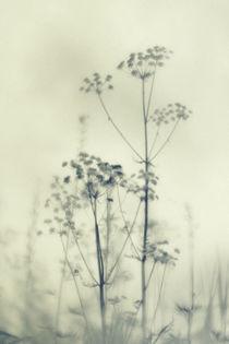 Wilde Blumen 4 von Priska  Wettstein
