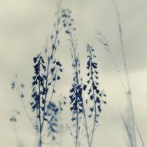 Wilde Blumen von Priska  Wettstein