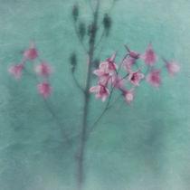 Farben by Priska  Wettstein