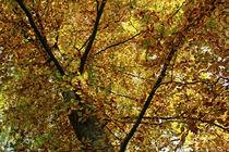 Goldener Herbst by Petra Dreiling-Schewe