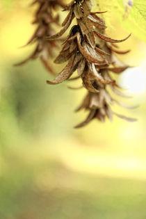 Herbststimmung von Petra Dreiling-Schewe