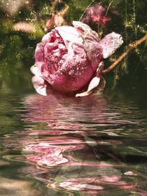 Rosenöl - Rose Oil  by Chris Berger