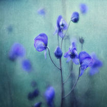 Sommer Wiese by Priska  Wettstein