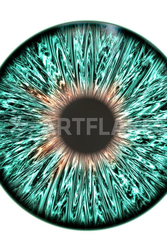 Blue-Green Iris\