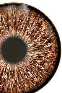 Brown Iris von oliverp-art