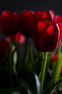 Leuchtendes Rot von Petra Dreiling-Schewe