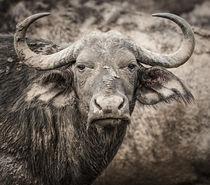 Water Buffalo von Maresa Pryor-Luzier