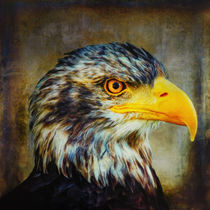The Eagle von AD DESIGN Photo + PhotoArt