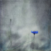 Diverge by Priska  Wettstein