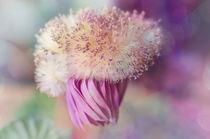 The Pink Plush von Nicole Frischlich
