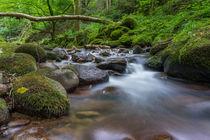 Black Forest Waterfall Fallen Tree by Tobias  Werner