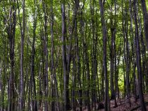 Wald VI von Wilhelm Dreyer