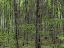Wald IV von Wilhelm Dreyer