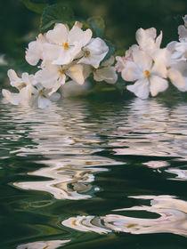 Blütenmeer - flowers sea von Chris Berger