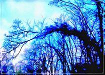Blue trees by norisknimo