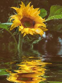 Für die Küche - Sonnenblumenöl by Chris Berger