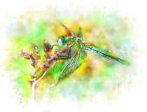 Emerald dragonfly von Elena Oglezneva