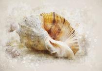 Naturist with seashells by Elena Oglezneva