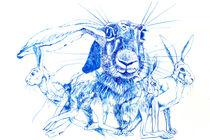 Mein Name ist Hase von Sabine Haag