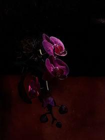 Lilac orchid - sunlight on shadow von Ro Mokka
