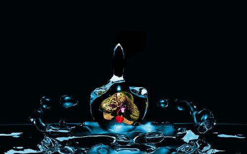 Orchidee-blau