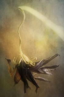 Last Dance by Petra Dreiling-Schewe