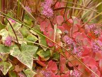 Herbstzauber von maja-310