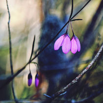 Woodland Bells by Karen Black