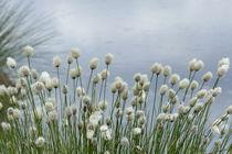 """""""wolliges Gras"""" von maja-310"""