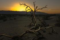 Death Valley Sunset by Klaus Tetzner