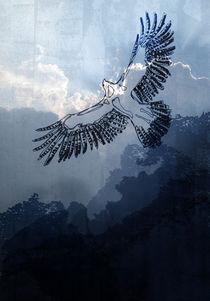 Eagle by hanna streif