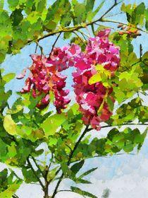 Rose Acacia von Elena Oglezneva