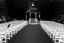 Wedding Visitor von Jim Corwin