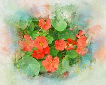 The flowers of nasturtium by Elena Oglezneva